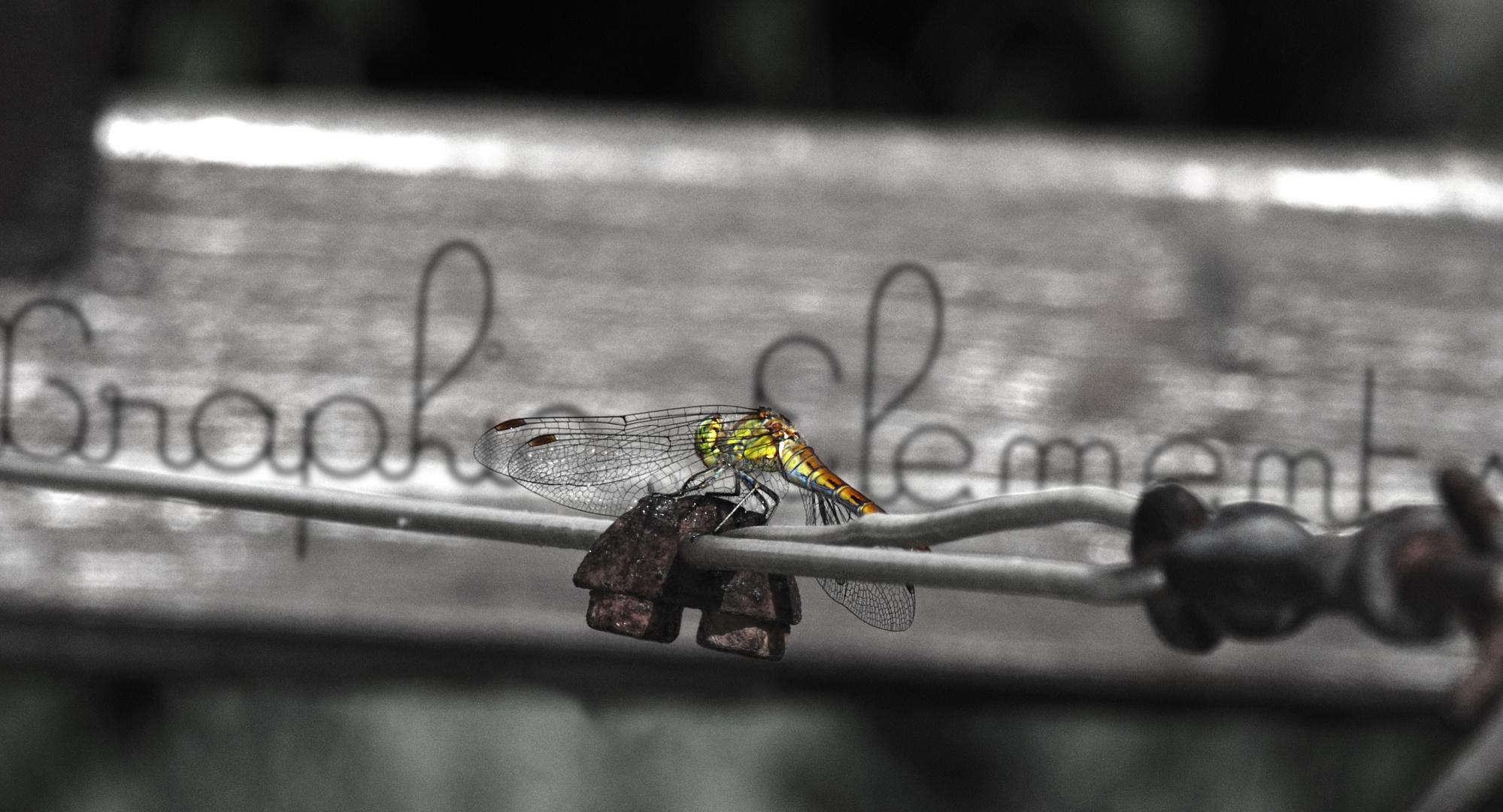 Libellen können so schön sein