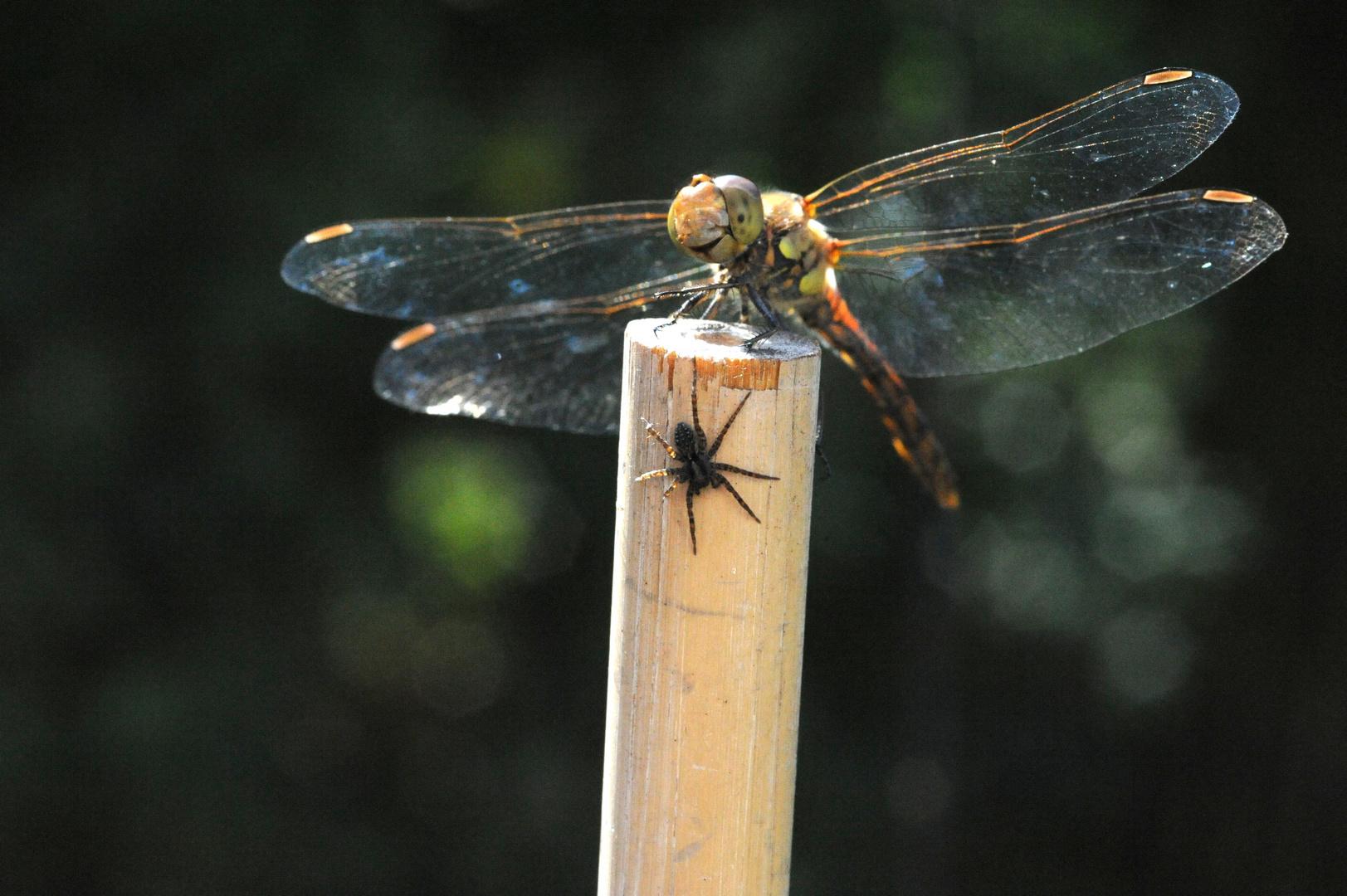 Libellen Tag
