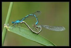 Libellenakt