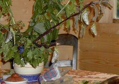 Libellenbaum