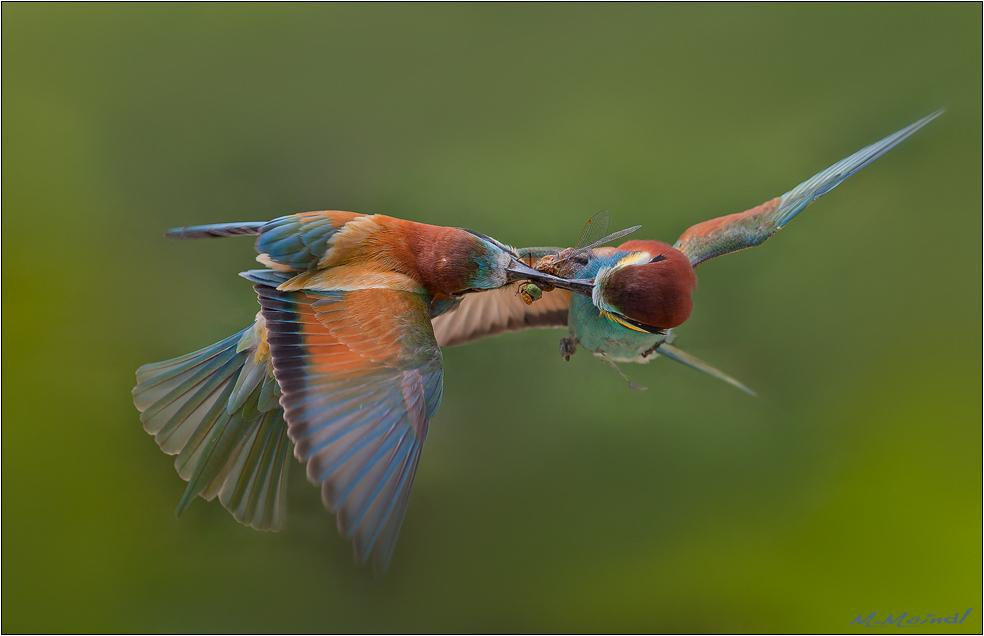 Libellenjagd