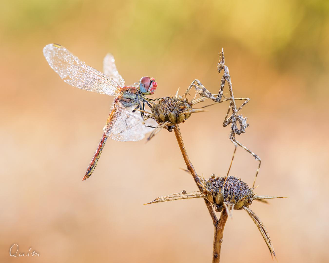 Libe&Mantis
