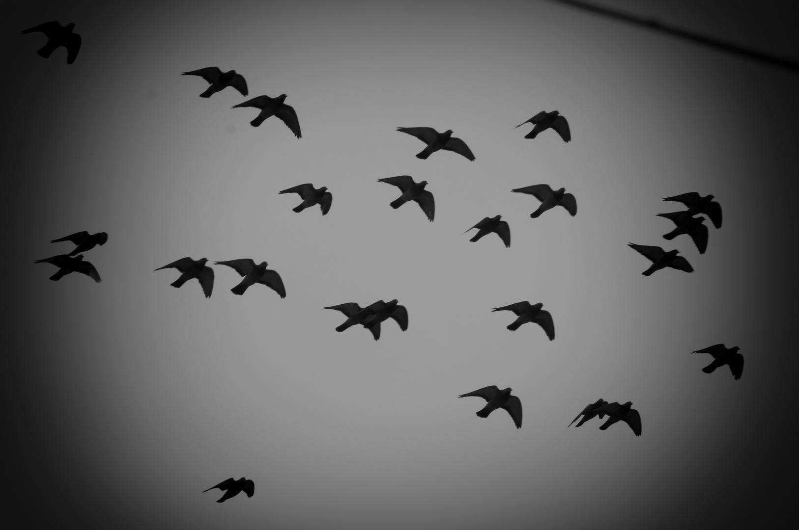 ..libertà..