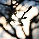 Licht am anderen Ende