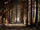 Licht am Ende der Fichtenschonung