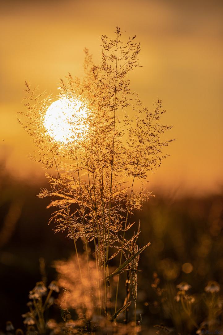 Licht am Horizont-1190