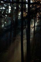 Licht des Herbst