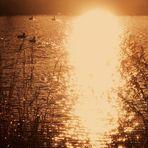 Licht fällt auf den See im Rosensteinpark