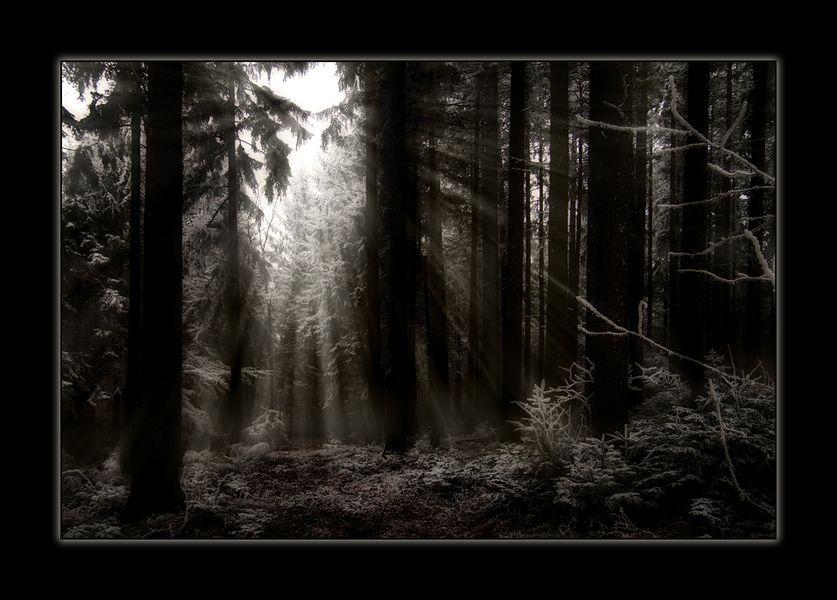 /Licht\
