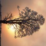 Licht im Baum
