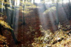 Licht im Buchenwald