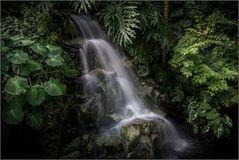 Licht im Dschungel des Lebens