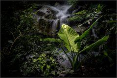Licht im Dschungel des Lebens II