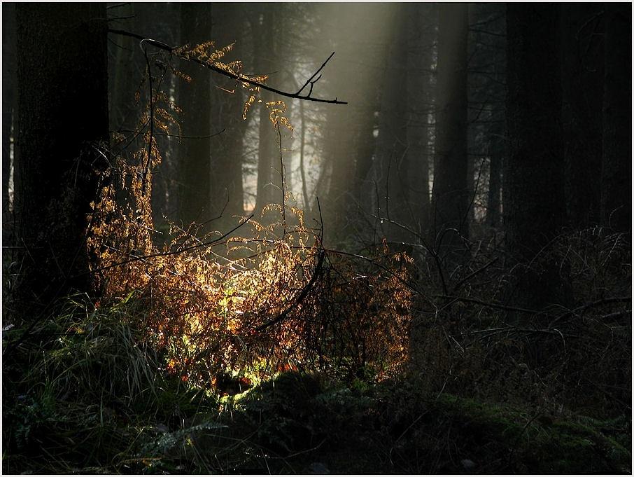 licht im dunkeln foto bild landschaft wald emsland. Black Bedroom Furniture Sets. Home Design Ideas