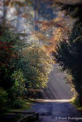 Licht im Herbst !