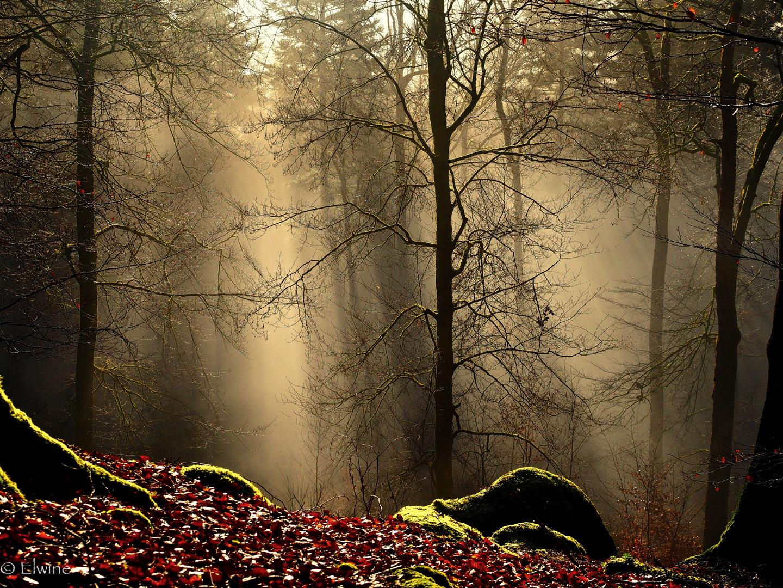 Licht im Nebelwald