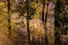 Licht im nebligen Herbstwald