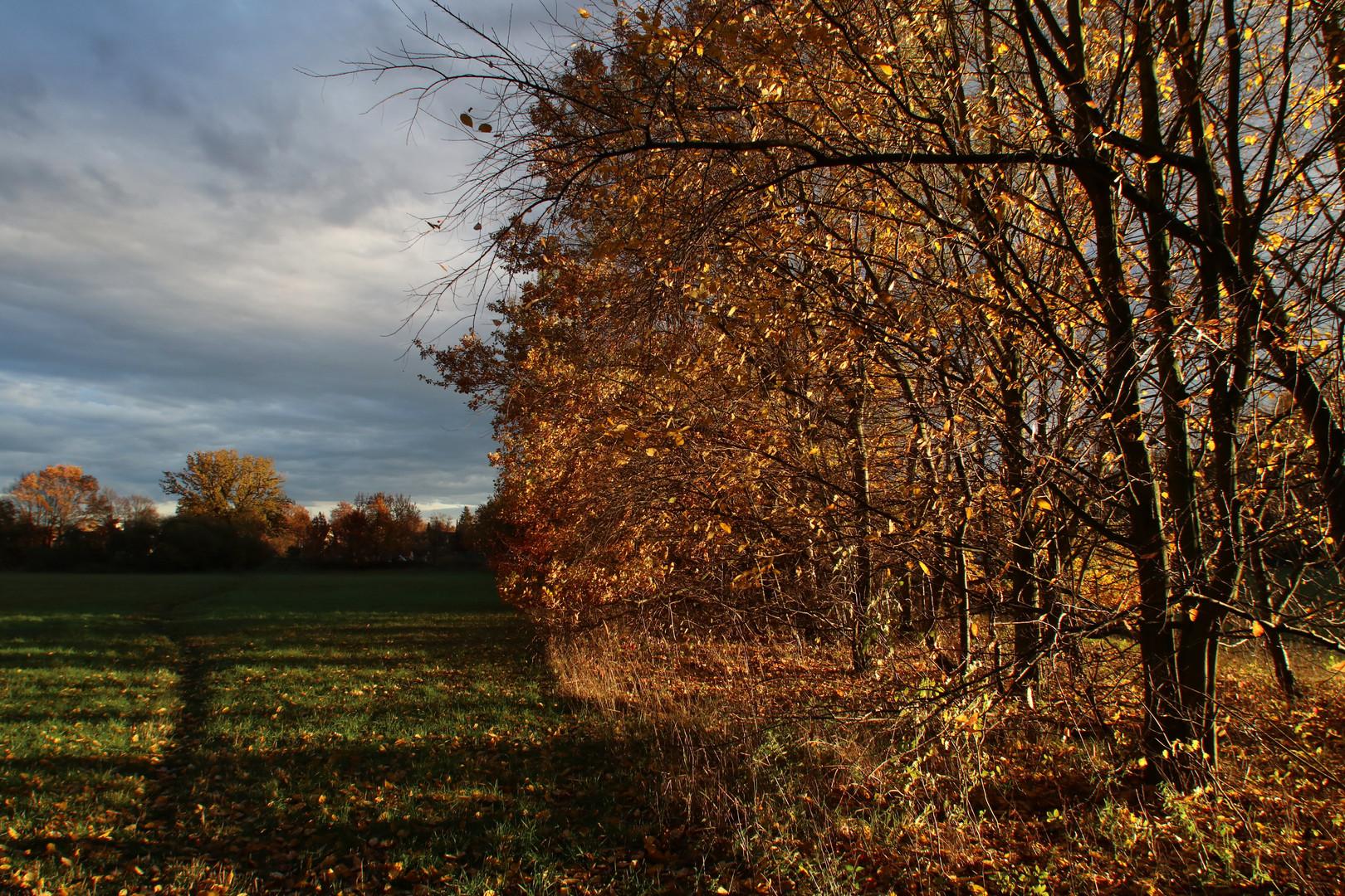 Licht im November