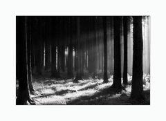 ~ Licht im Wald ~