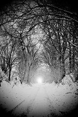 Licht (ist auch im schwärzesten Winter)