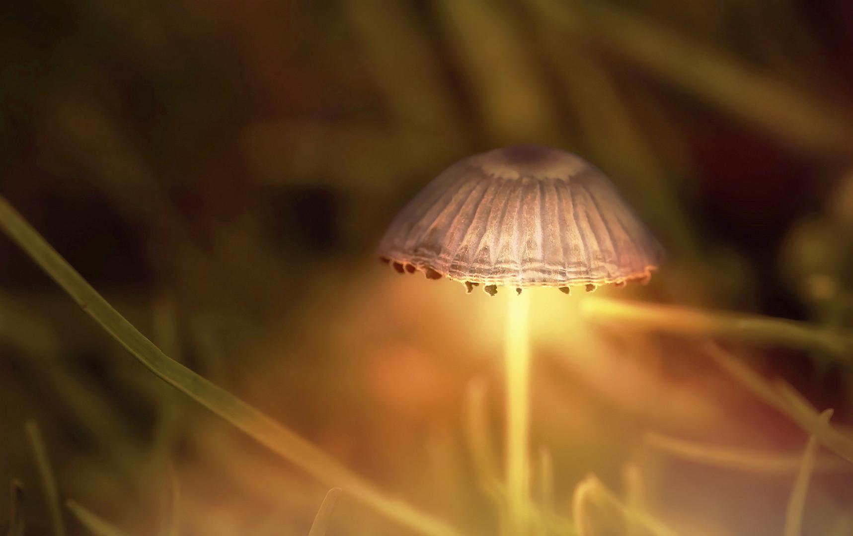 licht ist in der kleinsten hütte, äääähhhh im rasen ...