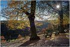 Licht macht Herbstfarben