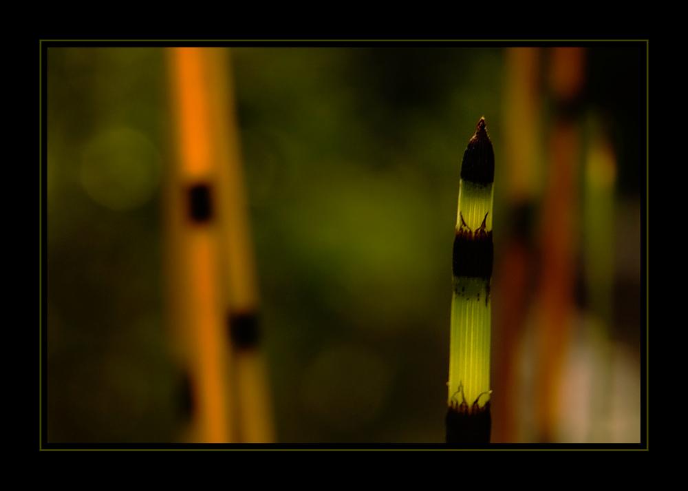 Licht-Momente