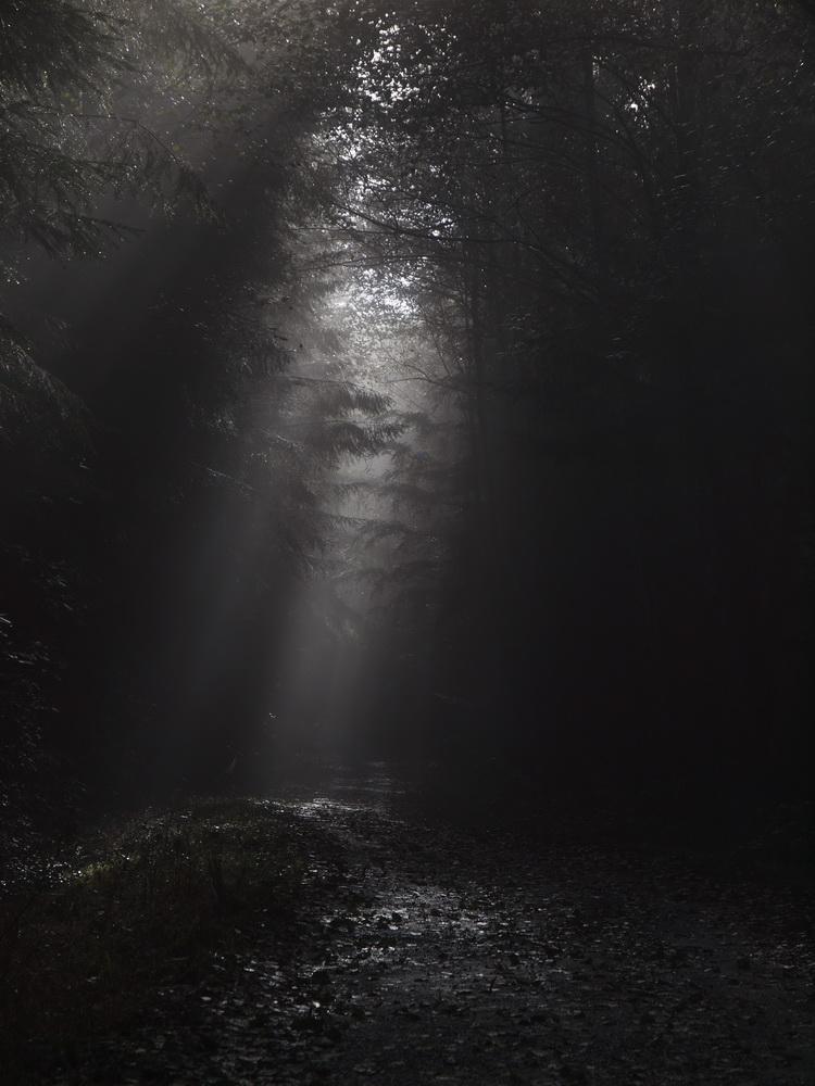 Licht, Nebel und Bäume 2
