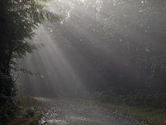 Licht, Nebel und Bäume