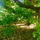 Licht umspielt die zarten Zweige und Blätter