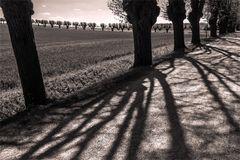 ****Licht und Schatten****