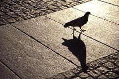 Licht und Schatten 4: Schwarze Taube