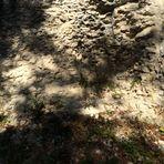 Licht und Schatten auf dem Albgestein
