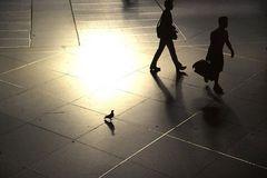 Licht und Schatten II: Eine Taube auf Reisen