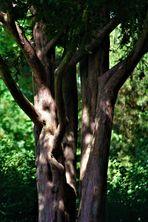 Licht und Schatten in der Natur