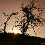 """Licht und Schatten: Mein Freund: """"Der alte Baum"""" ...."""