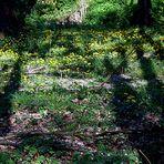 Licht und Schatten - Sehnsucht nach Licht und Sonne!