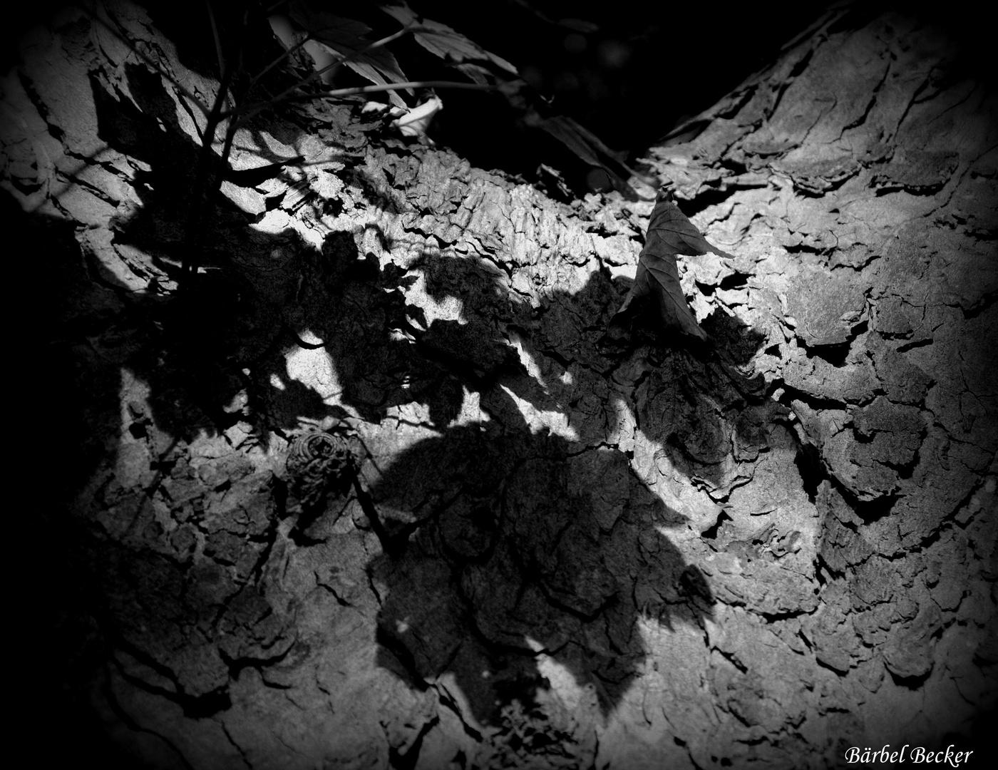 Licht und Schatten Teil 3