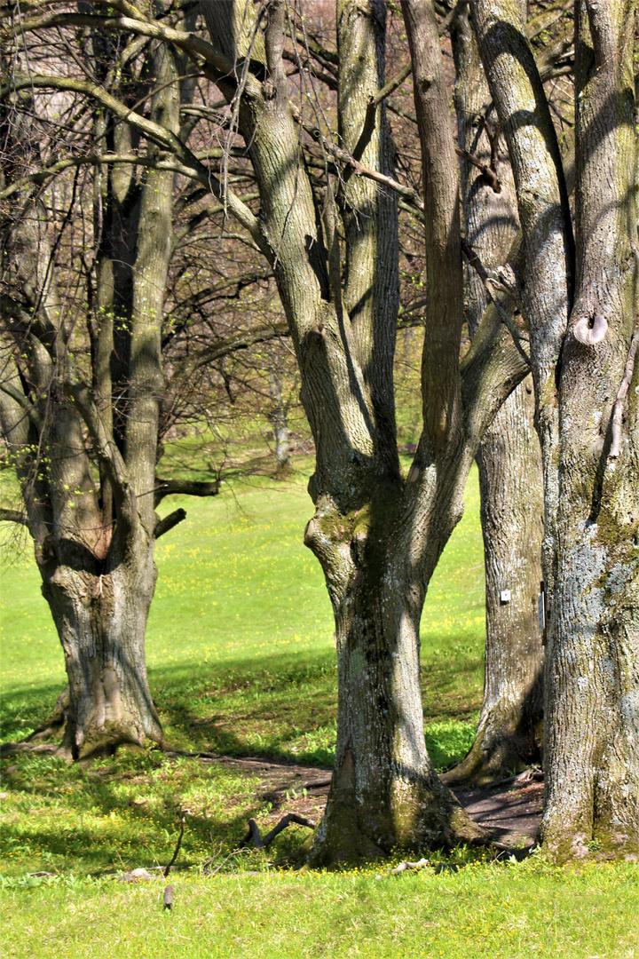 Licht und Schattenspiel ,auf den noch kahlen Bäumen