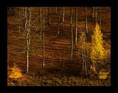 Licht- und Schattenspiel im Herbstwald...