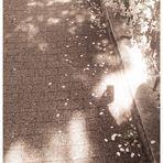 Licht und Schattenspiel zwischen Blütenblättern