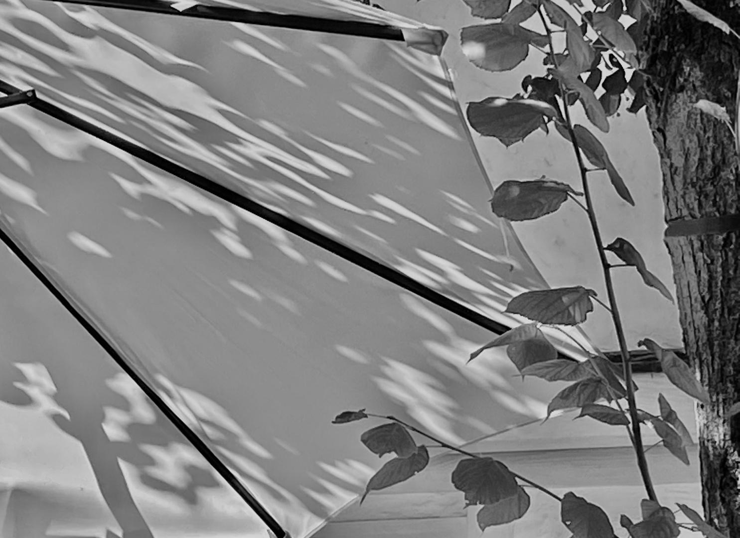 Licht und Schattenspiele