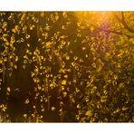 Licht-Vorhang - oder: Frühlingslicht blinkt...