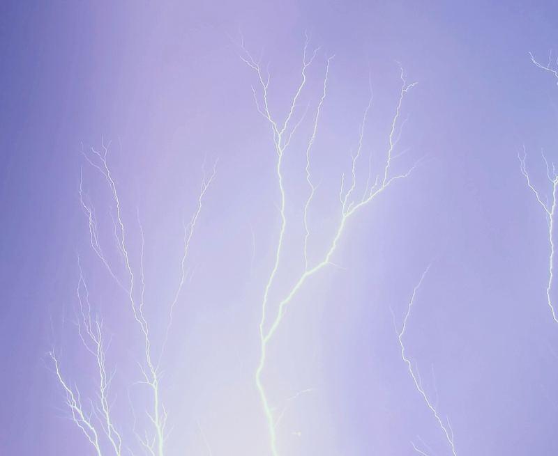 Lichtbäume 2