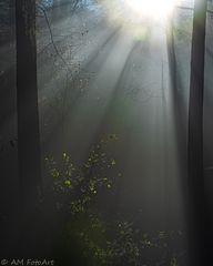 Lichtblick