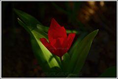 Lichtblick in Rot.........