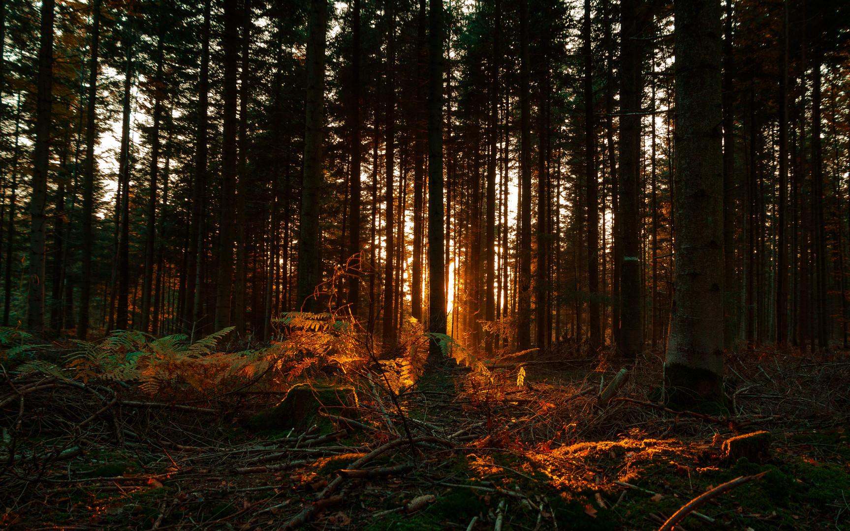 Lichtblick Wald
