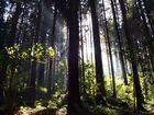 Lichtblicke aus dem Wald
