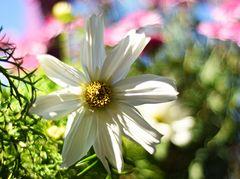 Lichtdurchflutet,Blütengleichnis...