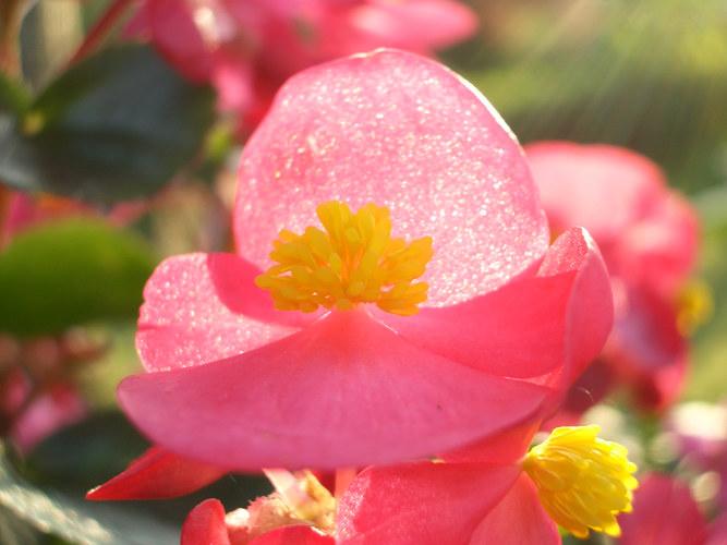 Lichtdurchflutete Blüte